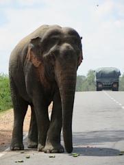 RH Sri Lanka 2